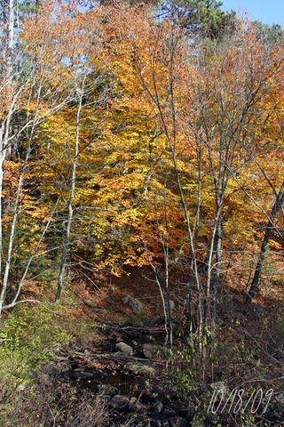 Tree in near to ledge of river-800