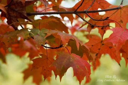 Orange and red leaves_800