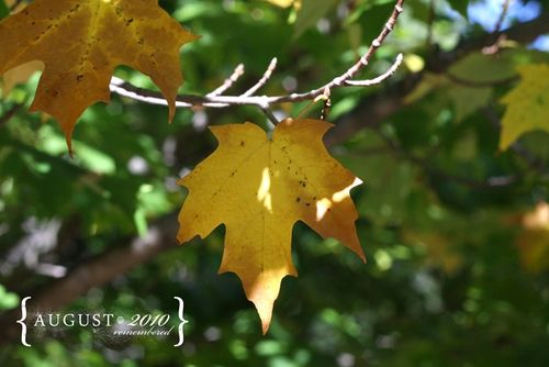 Yellow leaf fixed lens_word_800