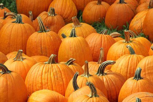 Pumpkins_800