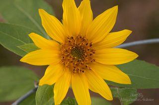 Flower open_800