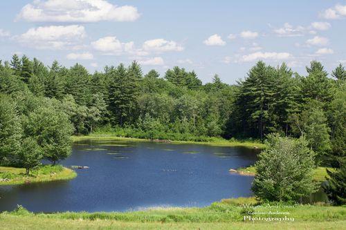 Wayne's Pond pic2_4x6_sig