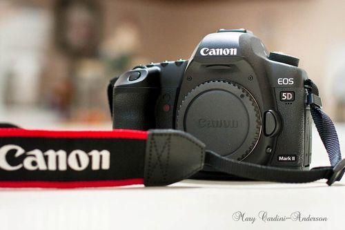 Canon 5d-800
